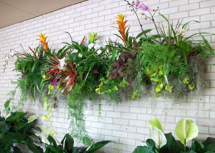 Best Plants for a Living Wall