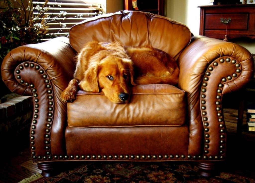 Materials You Need To Clean Your Leather Furniture